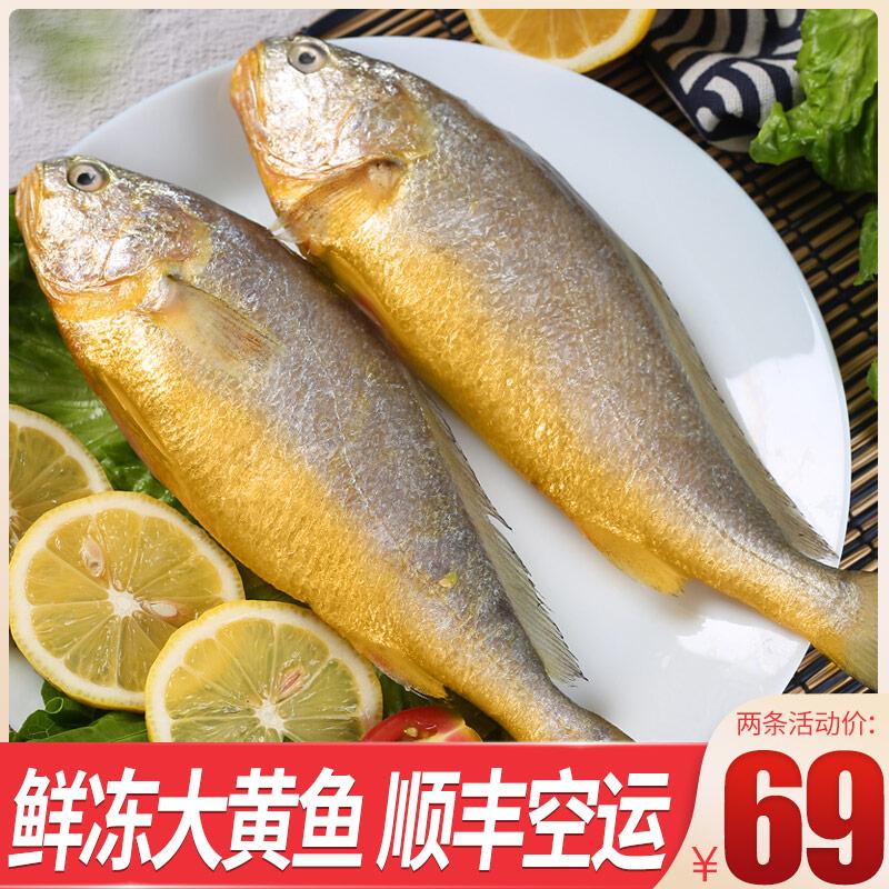 新鲜大黄花鱼冷冻生鲜水产小黄鱼