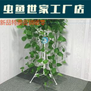 绿萝植物室内盆栽大叶绿箩大型花卉绿植客厅四季爬藤挂壁绿罗好养
