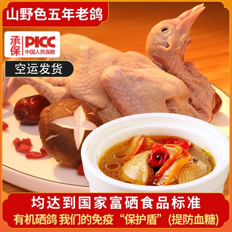 山野色5年老鸽子肉生鲜肉鸽农家散养土鸽子煲汤生鲜350g*1只装