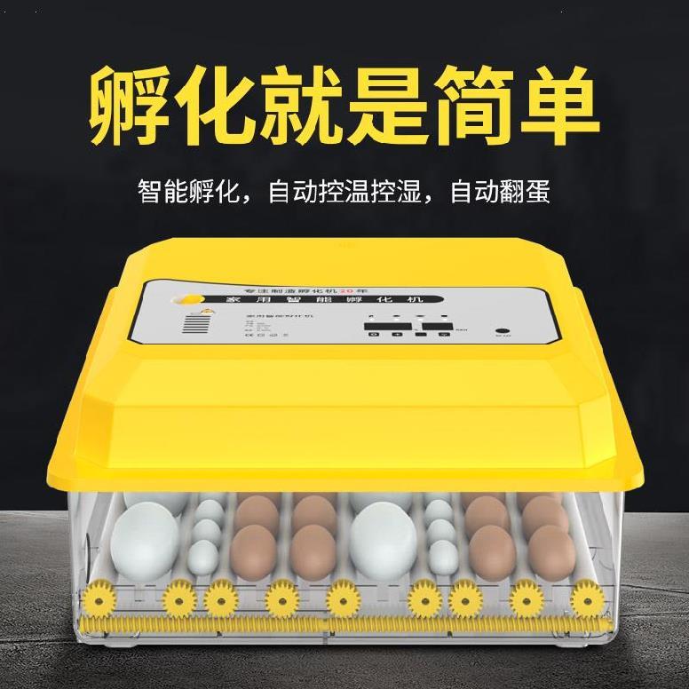 鸽子蛋智能鸽蛋宠物鸟笼牢固儿童小型设备多用途鸡仔孵化箱鸡蛋