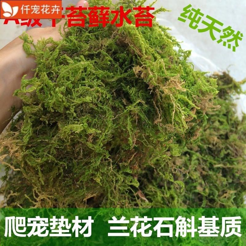 兰花海藻专用苔藓鲜活青苔植物盆景四季保湿造景铺面球垫材