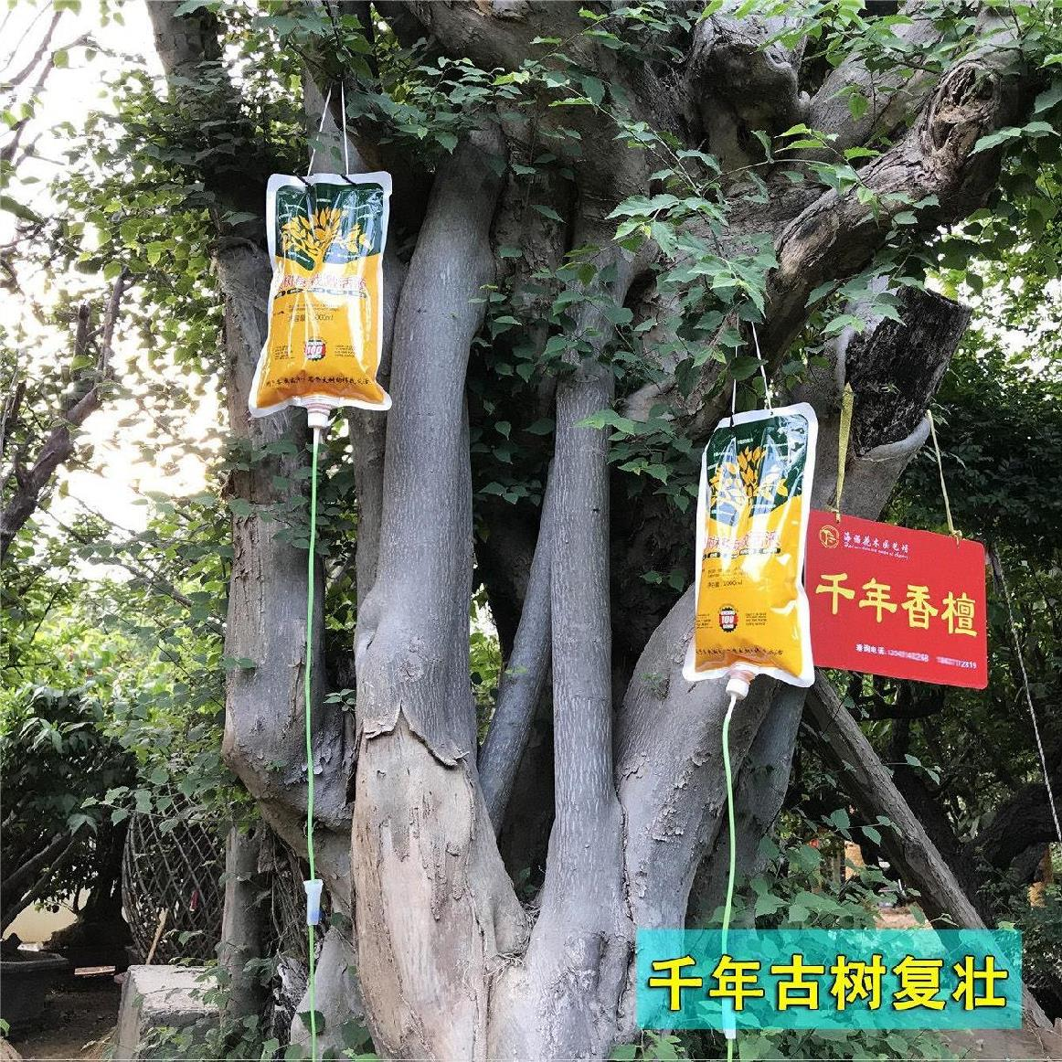 . Big tree nutrient liquid bag hanging liquid tree needle hanging liquid promotes root sprouting of large-scale landscape diseased trees in fertilizer old tree fruit forest