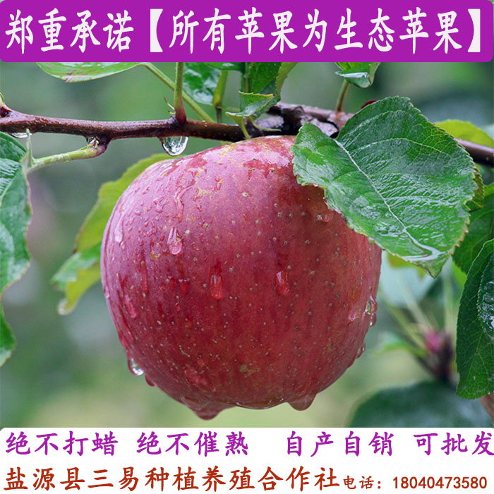Daliang Mountain Lugu Lake Yanyuan fruit wild ugly Apple rock sugar heart red Fuji super large fruit not Yunnan ten jin
