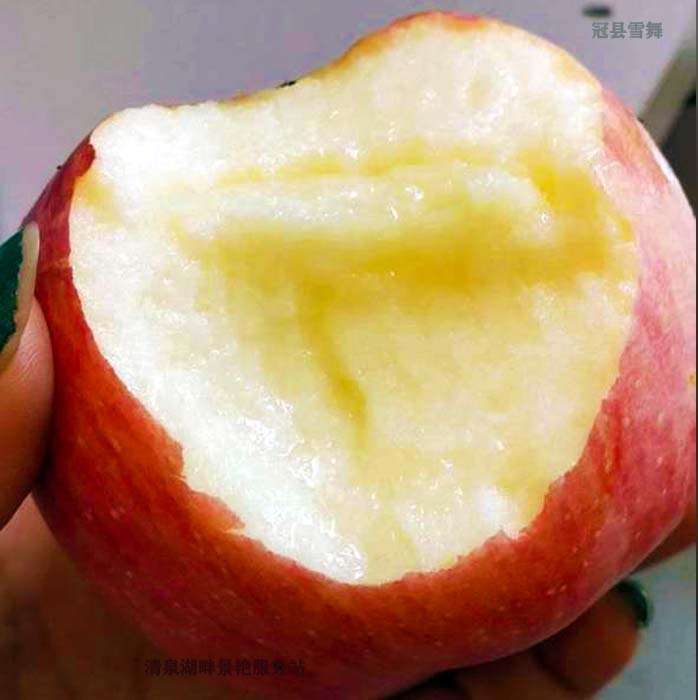 Qingquan Lake Farm specialty apple in Daguan County, Liaocheng, Shandong Province