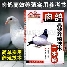 肉鴿高效養殖技術一本通養鴿子書籍鴿子養殖技術書大全與疾病防治技術書養鴿子書籍鴿場經營管理書籍飼料配制飼養管理常見病診治書