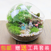 Moss Micro landscape Dragon Cat Ecological bottle Quirky plant creative office DIY mini Glass Potted gift