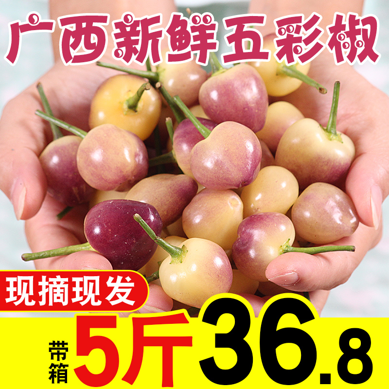 正品保证新鲜五彩椒广西特产5斤包邮五色农产品小灯笼辣椒现摘七彩泡椒