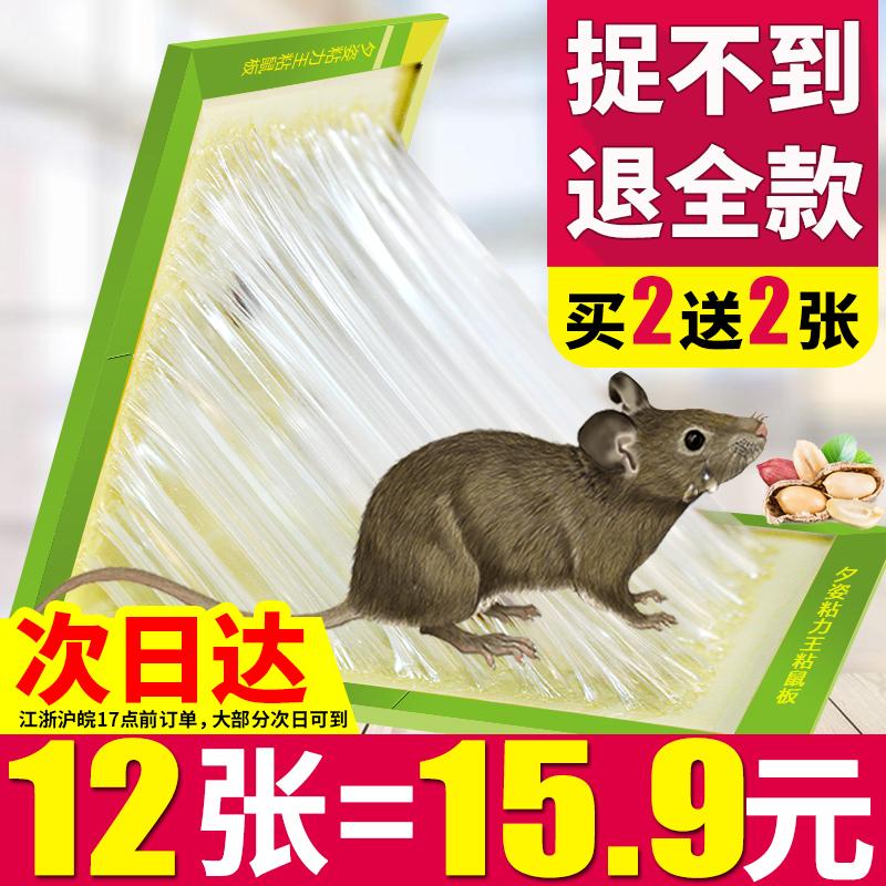 粘抓老鼠贴笼胶夹药粘鼠板强力捕鼠灭鼠器神器克星正品家用一窝端
