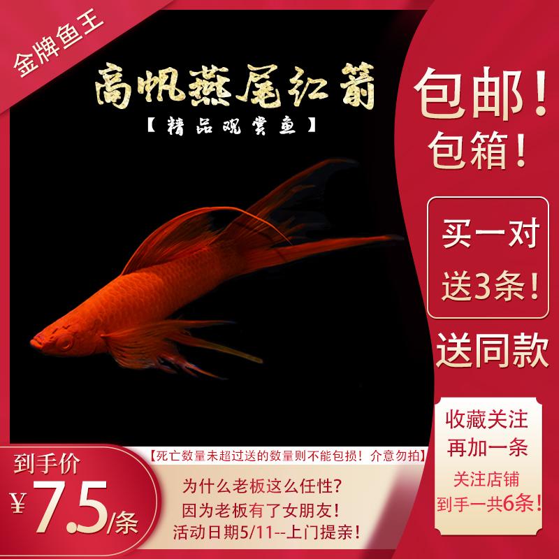 Рыбы Артикул 589647674323