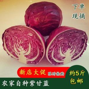 农家自种现新鲜紫甘蓝沙拉绿色5斤