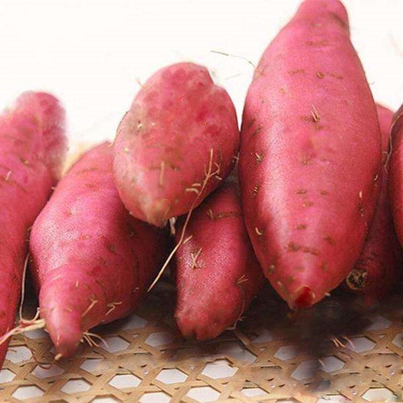 奥瑞贵州农家高原山地自种水果 红薯番薯新鲜现挖地瓜山芋带箱5斤