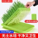 猫草水培猫草种子种植套装 猫咪化毛膏去毛球猫草种籽猫零食猫薄荷