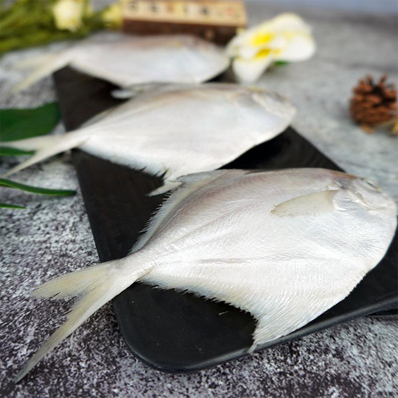 海州湾本地野生捕捞鲳鱼白鲳鱼肉质细腻六七个一斤。10元/250g