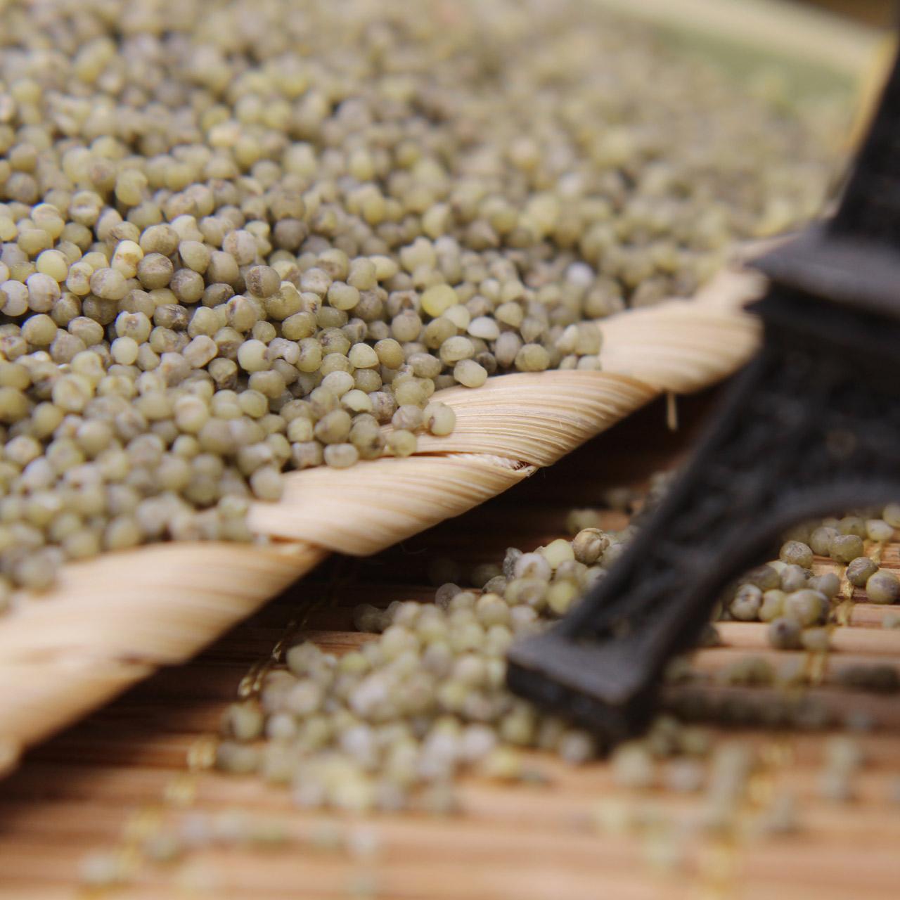 朱碌科 東北有機黑小米1000g(250g^~4) 旱地特產黑微米 五穀雜糧