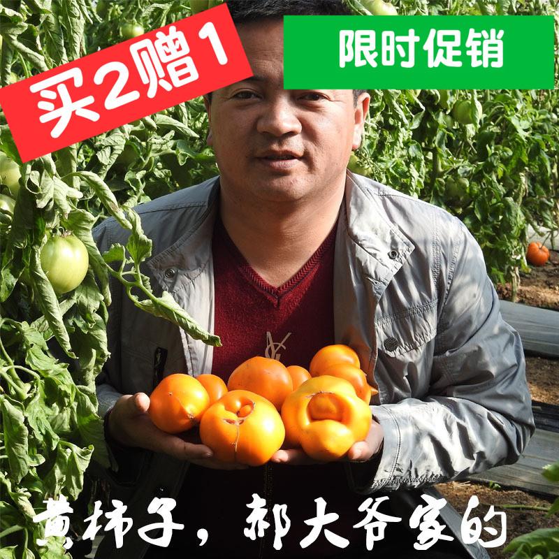 黄色西红柿  大黄柿子时鲜果蔬内 特色水果铁皮柿子黄番茄6斤包邮