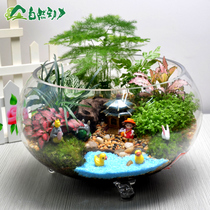 Moss Micro landscape combination plant ecological bottle miniature potted plants Office desktop Green Flower Creative Gifts