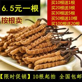 【6.5元一根】西藏那曲冬虫夏草正品 新鲜正宗虫草可配礼盒冬虫草图片