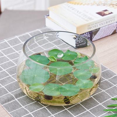 水培植物玻璃瓶透明器皿绿萝水培容器大号创意花瓶多功能水养花盆