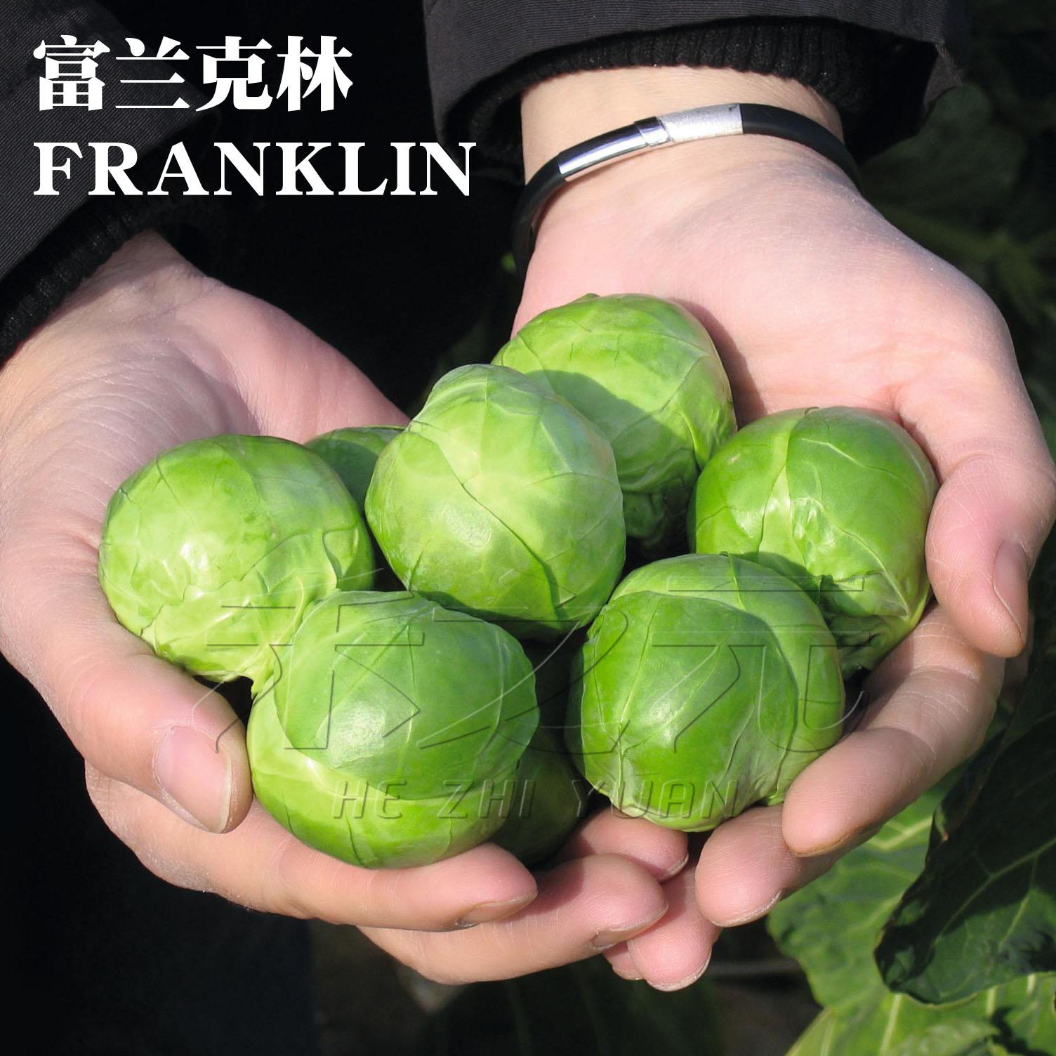 紫进口孢子甘蓝种子甘兰抱子蔬菜种孑四季盆栽现在种阳台春季秋季