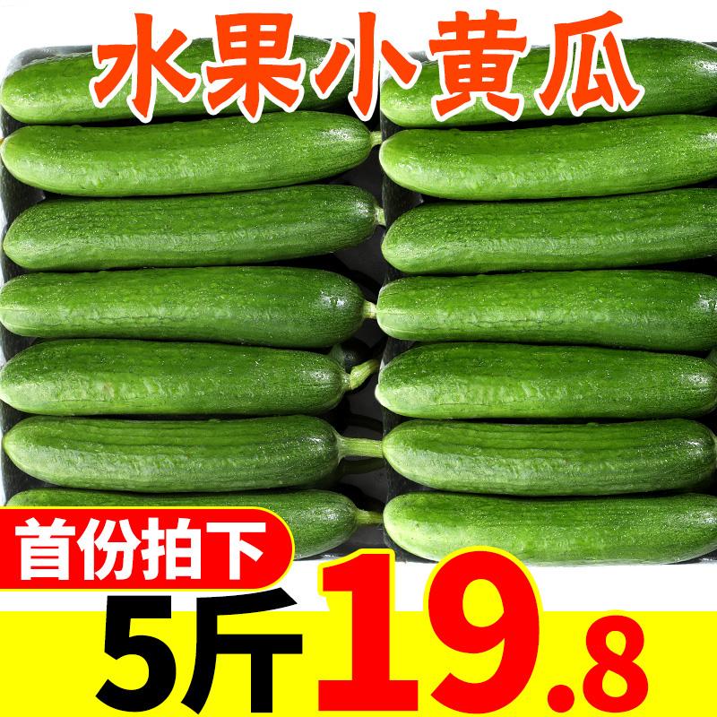 新鲜水果小黄瓜5斤整箱脆嫩荷兰小青瓜孕妇蔬菜山东特产批发包邮