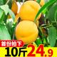 黄桃新鲜水果当季整箱10斤应季包邮砀山时令现摘5蜜桃脆桃黄桃子