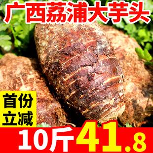小新鲜特大农家槟榔芋香芋特产批发 免邮 广西荔浦芋头正宗整箱10斤