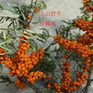 领2元券购买山西 吕梁特产 特色酸果 维生素 野果  生鲜野生沙棘果 野生水果