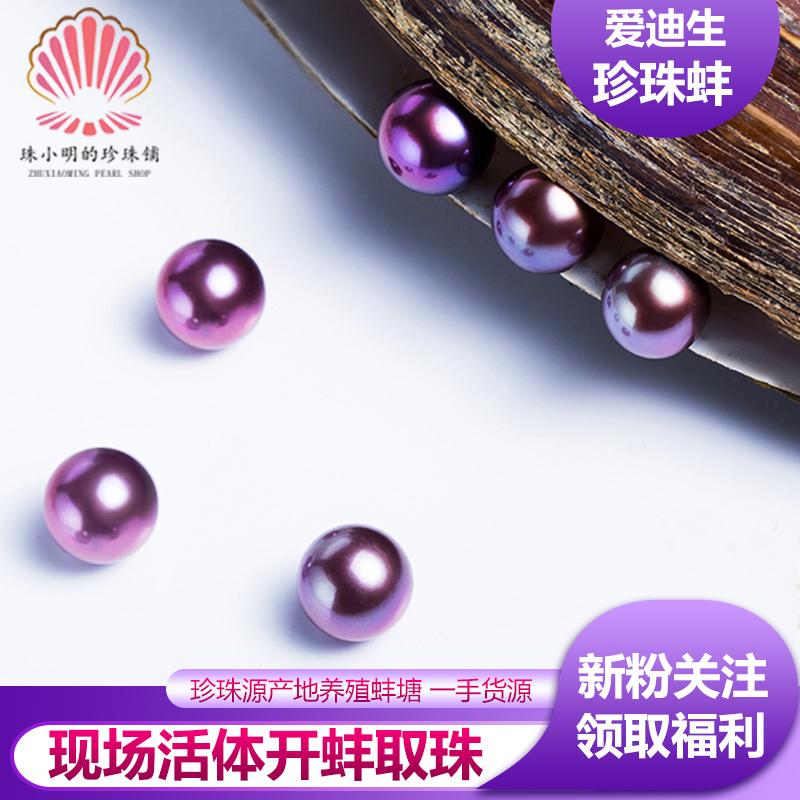 珠小明淡水爱迪生珍珠蚌 开蚌取珍珠 淡水有核养殖珍珠 鲜活河蚌