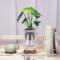 绿萝龟背竹吸甲醛绿植净化空气办公室内玻璃包邮桌面水培植物盆栽