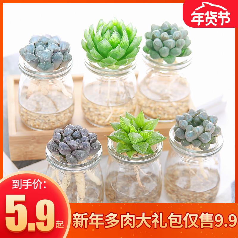 立乾园艺多肉植物玉露寿水培套餐组合盆栽 室内桌面盆栽送水培瓶
