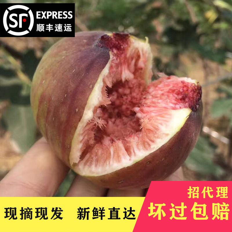 四川特产新鲜红皮无花果3斤大果14-18个现摘现发 顺丰包邮