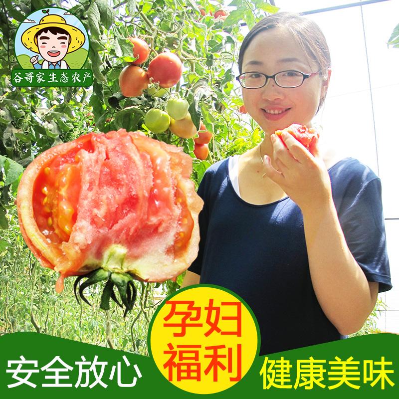 西红柿新鲜蔬菜自然熟沙瓤农家自种谷哥家时令孕妇洋柿子番茄500g
