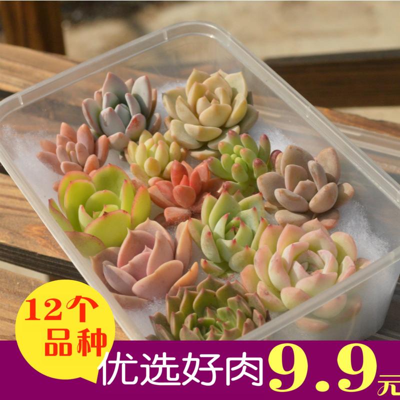多肉植物种植新手套餐含盆土包邮 肉肉植物多肉组合盆栽 绿植花卉