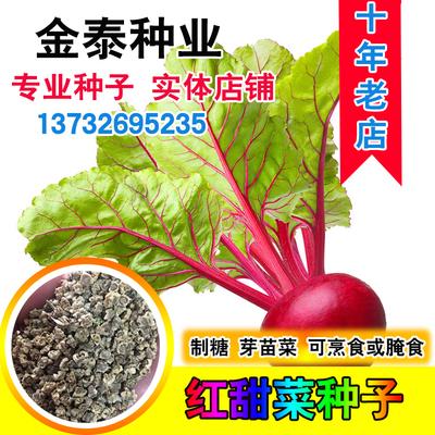 散装红甜菜根种子田菜根红菜头芽苗菜紫红甜菜头种子四季播种籽