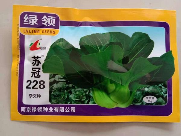 新特矮黑叶苏州青种子耐寒油冬菜上海青梗菜阳台大田秋冬季蔬菜籽