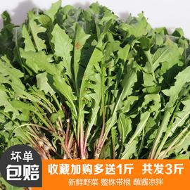 新鲜现挖蒲公英3斤装野生带根纯山野菜天然特级婆婆丁苗药用嫩叶图片