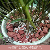 赤水金钗石斛专用丹霞石赤水红色石头种植铁皮石斛吸水姓强基质