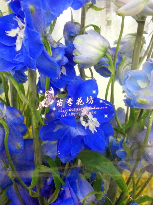 网红网红上海鲜花进口大飞燕客厅橱窗酒店大堂装饰高档配花