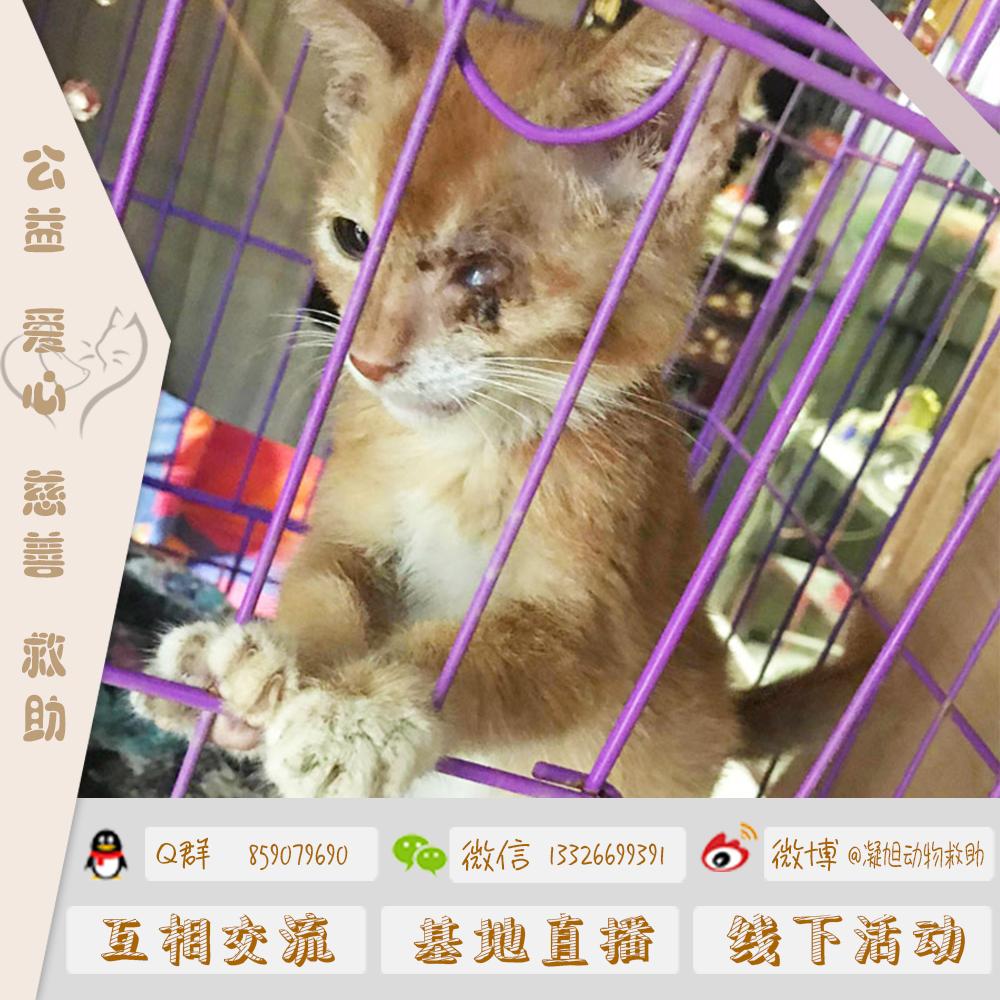 公益爱心慈善救助捐赠流浪猫救助猫狗粮沐浴露海洋金枪鱼罐头猫砂