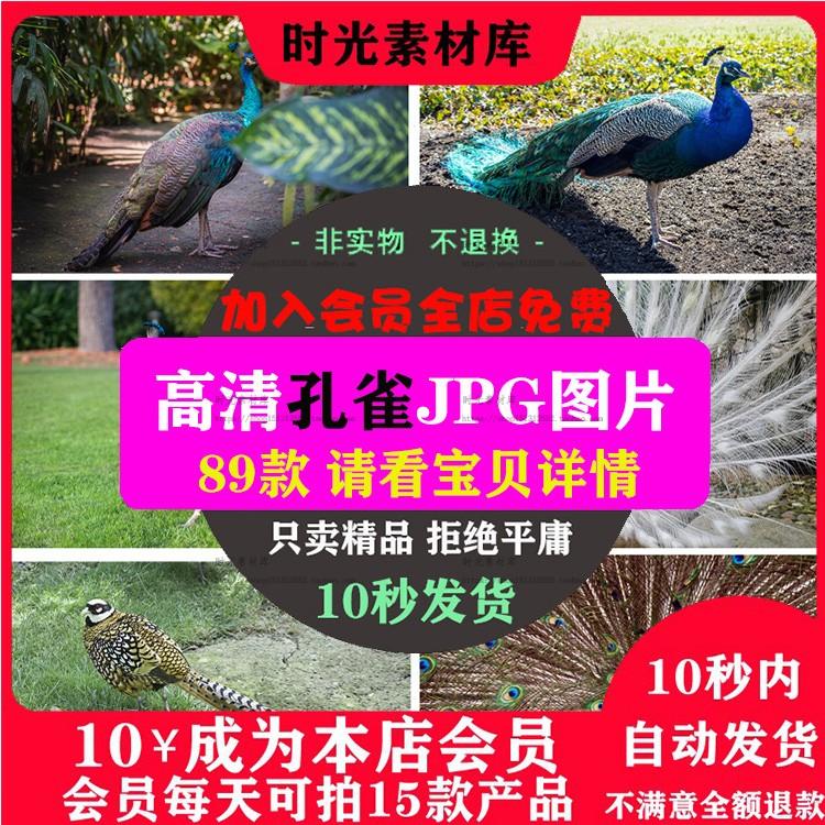 B232 高清图片孔雀蓝孔雀羽毛鸟类自然生物野生动物美工设计素材