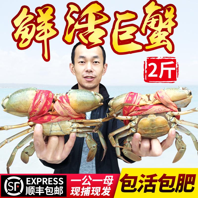 三门青蟹鲜活螃蟹1公1母特大2斤海螃蟹水产海鲜红鲟膏蟹超大海蟹