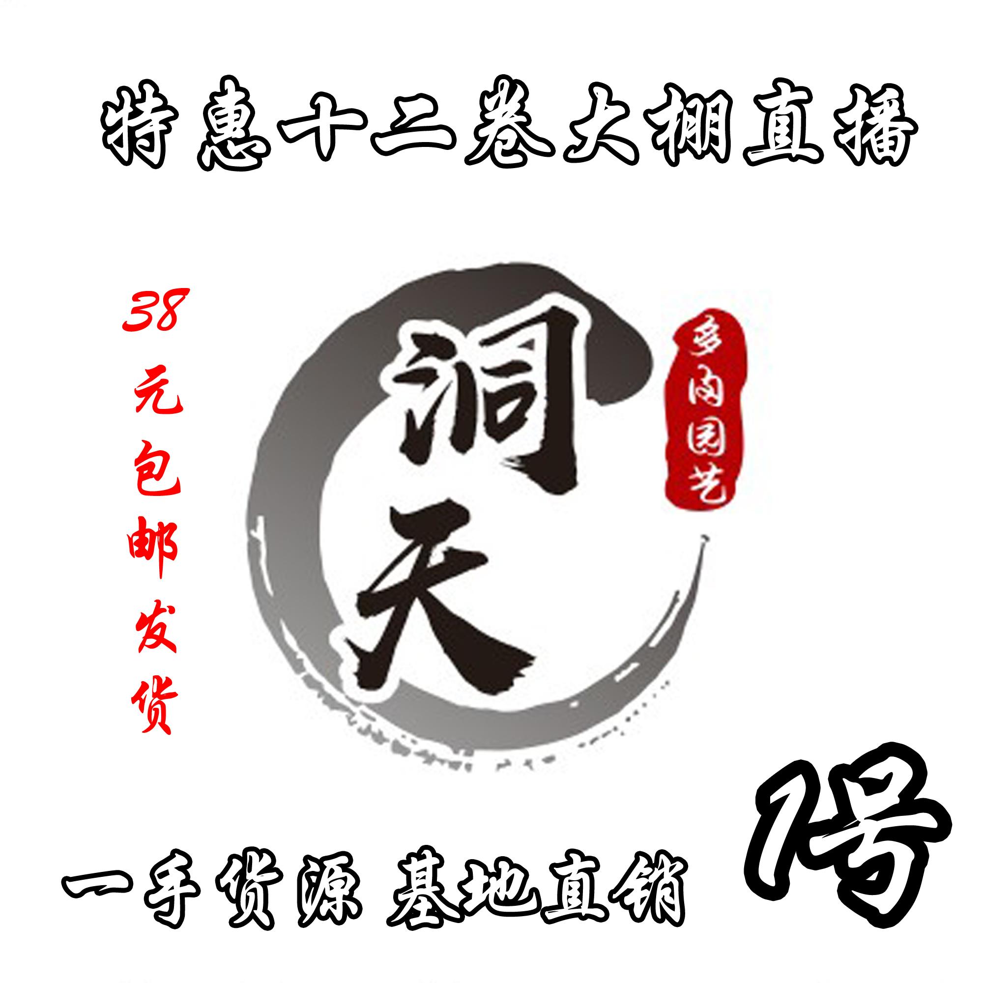 【1号直播链接】霓虹灯北斋锦瓦苇多肉植物十二卷盆栽套餐室内