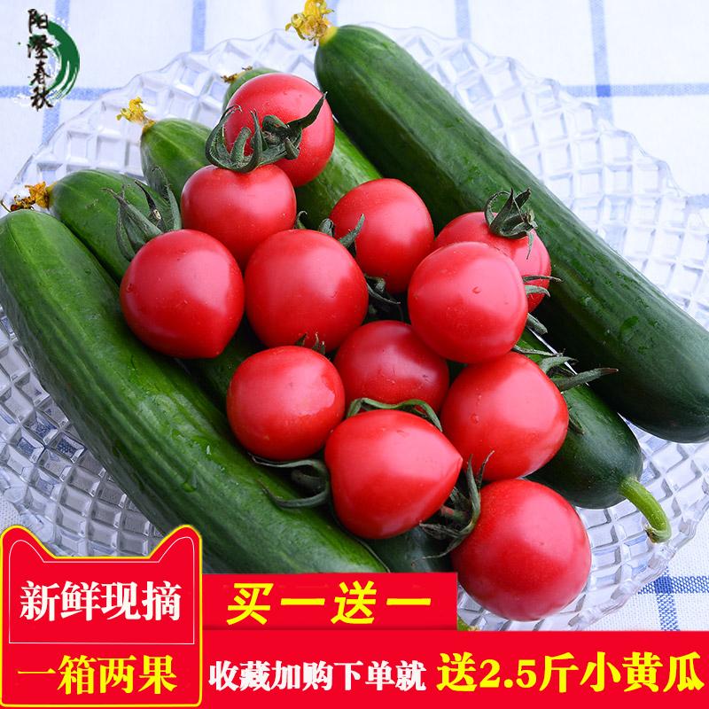 新鲜小西红柿番茄千禧圣女果水果小黄瓜混装农家蔬菜特价批发包邮