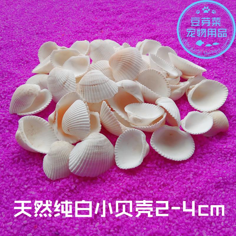 Аквариум вода гонка коробка ландшафтный дизайн природный раковина оболочка украшение белый кокос моллюск земля тайвань декоративный diy больше мясо домой ткань вид