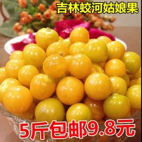 蛟河东北特产新鲜当季水果大黄菇娘果洋甜姑娘果灯笼果5斤包邮