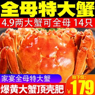 抢14只阳澄湖协会大闸蟹特大清水公母蟹大螃蟹河蟹鲜活现货水产