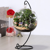 Moss Micro landscape ecological bottle creative potted glass hanging moss bonsai mini green planting Desk Decoration