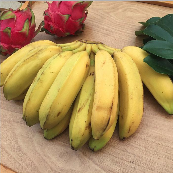 广东大蕉新鲜水果芭蕉酸甜非小米香蕉海南皇帝粉蕉banana 5斤包邮