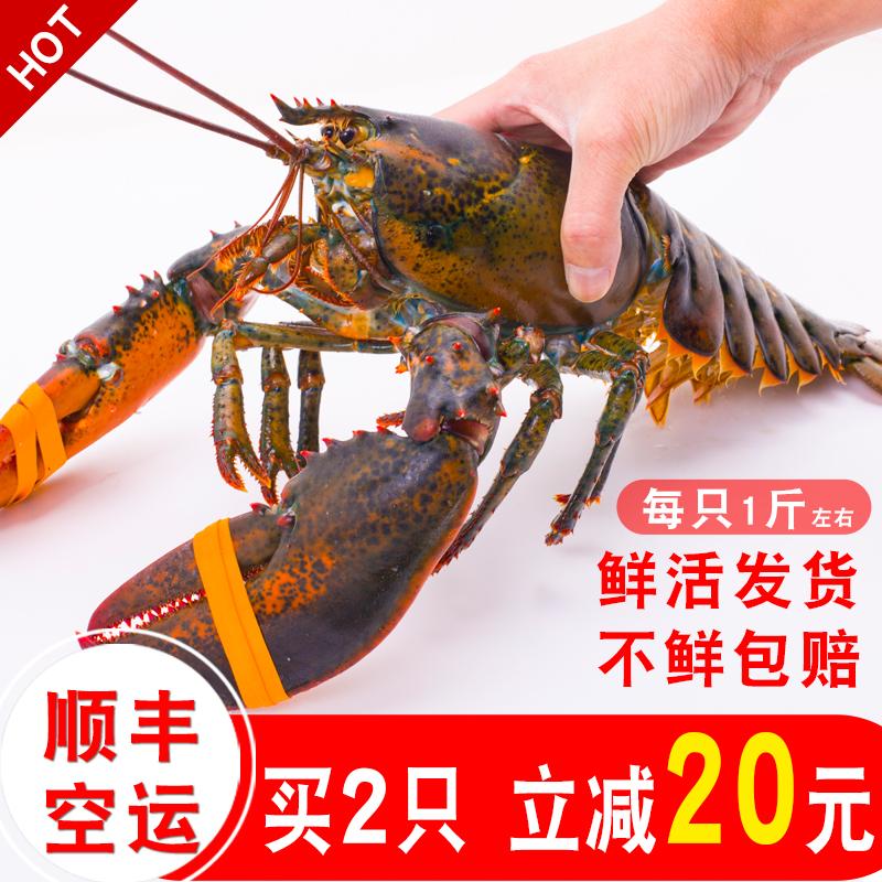 波士頓龍蝦鮮活大龍蝦 特大波龍奧龍海鮮水產鮮活 1~10斤澳洲活蝦