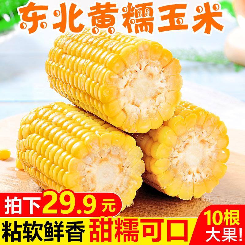 东北黄糯玉米10根装新鲜甜黏玉米棒子即食粘嫩苞米粒真空蔬菜包邮